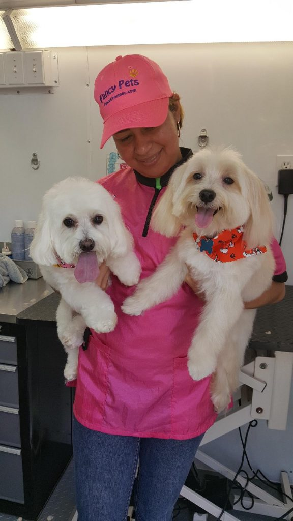 dogs being groomed